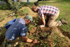 plantingcloseup2014-235x157